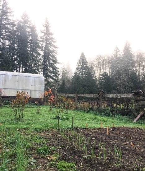 Homestead Blog Hop Feature - November Gardening Chores and Tasks