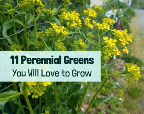 Homestead Blog Hop Feature - 11 Perennial Greens you will Love to Grow