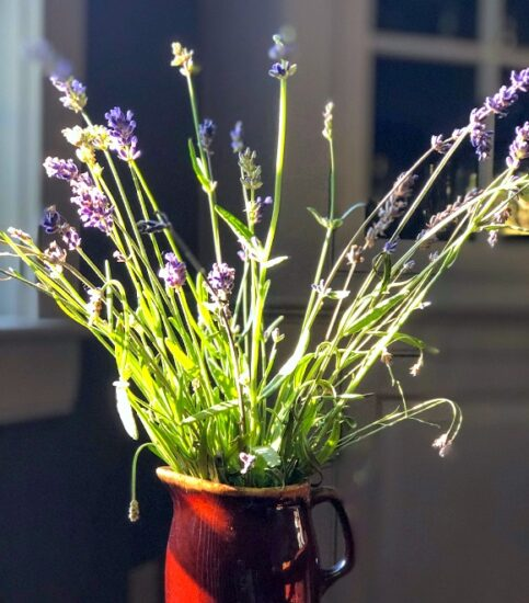 Homestead Blog Hop Feature - 13-Ways-To-Preserve-Fresh-Herbs