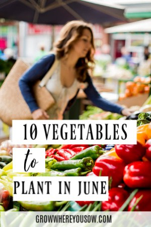 https://growwhereyousow.com/vegetables-to-plant-in-june/