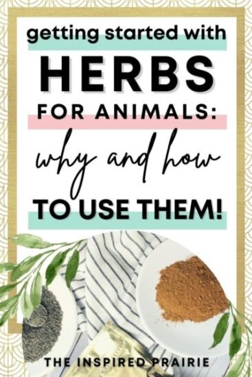 Homestead Blog Hop Feature - Getting Started with Herbs for Animals - why and how