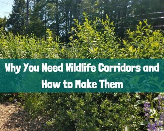 Homestead Blog Hop Feature - Why You Need Wildlife Corridors and how to make them