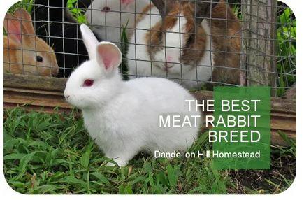 Homestead Blog Hop Feature - Best Meat Rabbit Breed