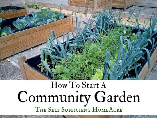 Homestead Blog Hop Feature - How to start a community garden
