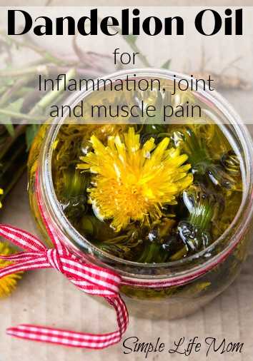 Dandelion oil for inflammation and sore joints and muscle pain from Simple Life Mom