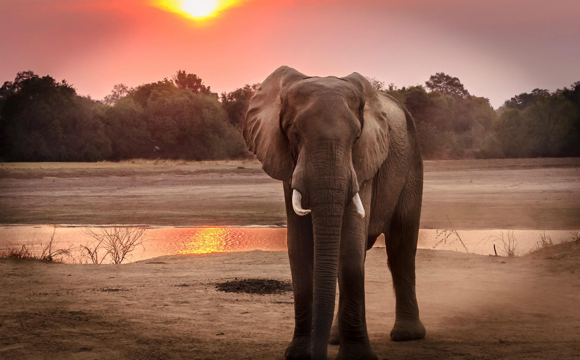 wildlife-photography-of-elephant-during-golden-hour-1054655 (1)