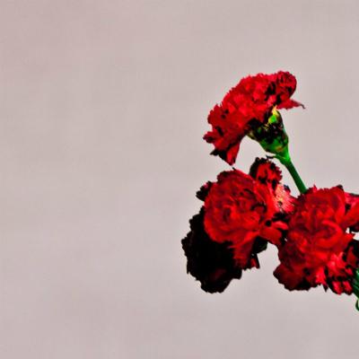 Photo Credit: iTunes