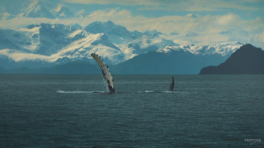 whale-fin-mt-bg