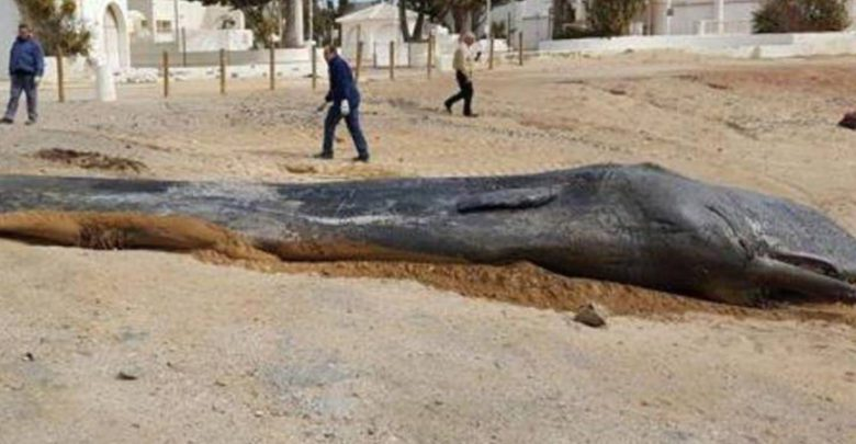 Photo of Another Whale Has Died Due to Plastic Pollution