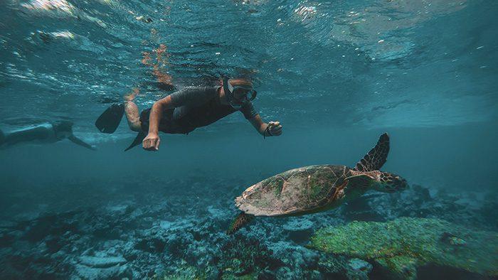 snorkeling sail universe