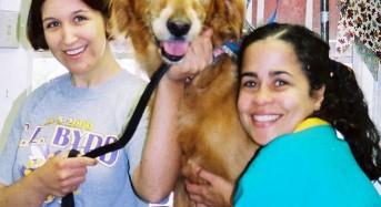 Benefits of Opening a School of Pet Grooming