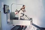Writing a Self-Service Pet Wash Business Plan