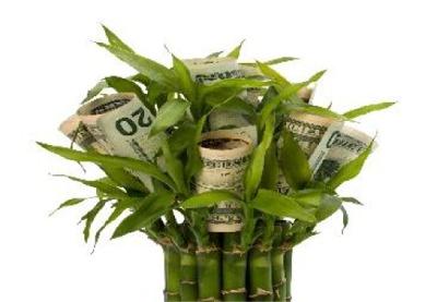 buy-wellness-madra