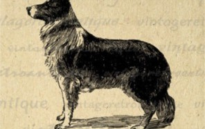 Lost History of the Canine Race