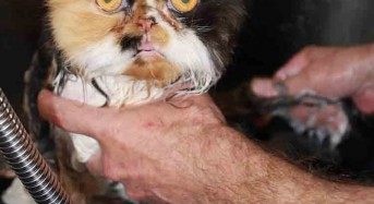 Cat Grooming Basics