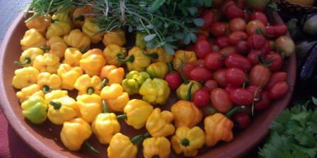 A variety of peppers grows at the urban farm.