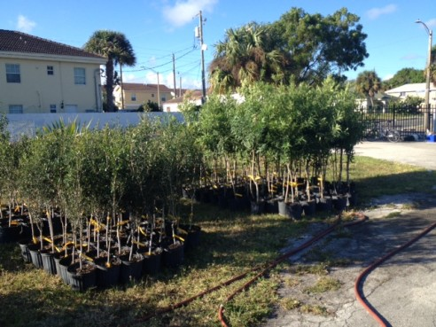 Free trees will be given to visitors on opening day.