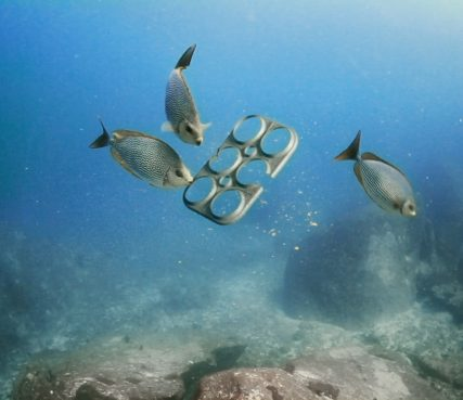 Biodegradable six-pack rings are also edible - and sustainable, made from spent brewery grains. /Courtesy phoito