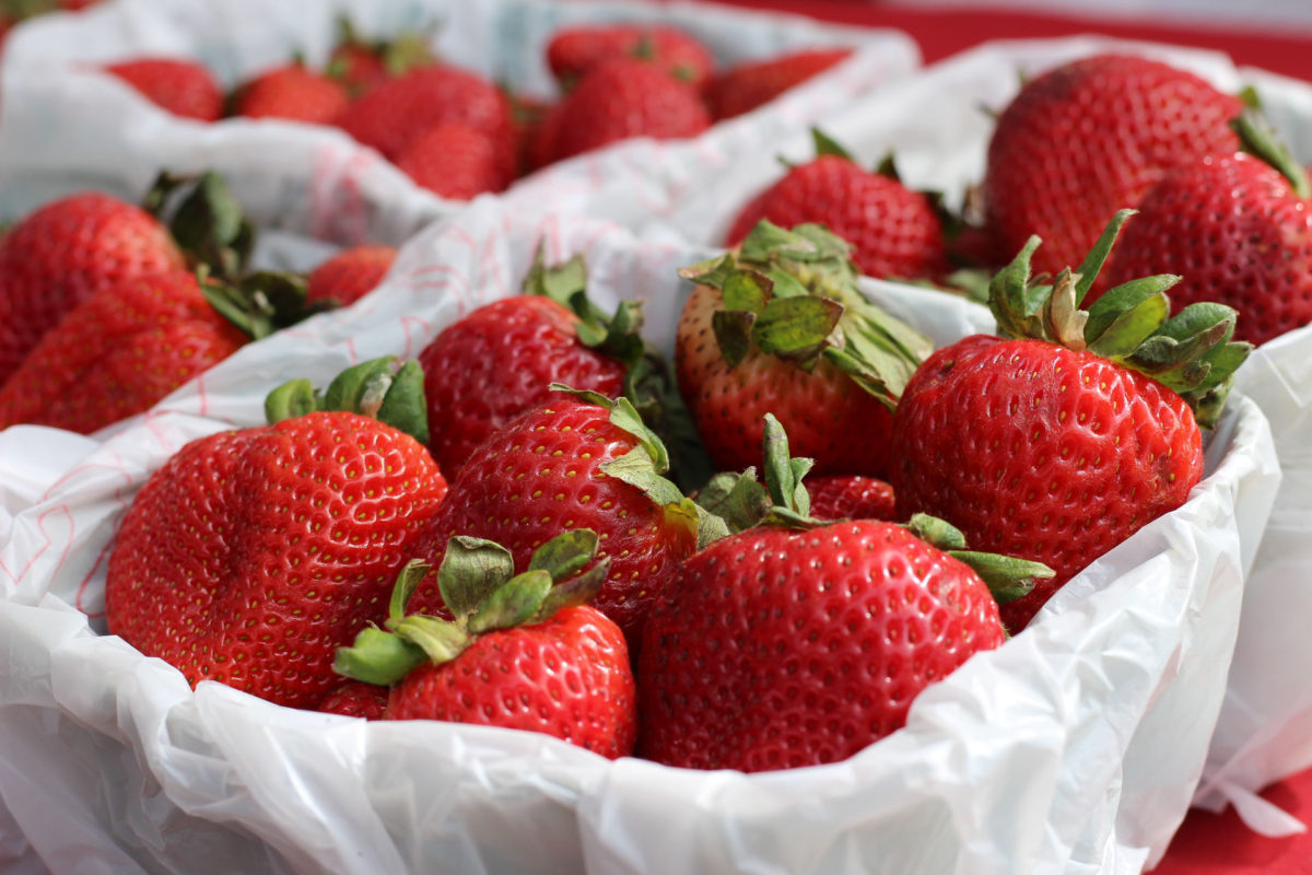 Will history be made at the Plant City Strawberry Festival?