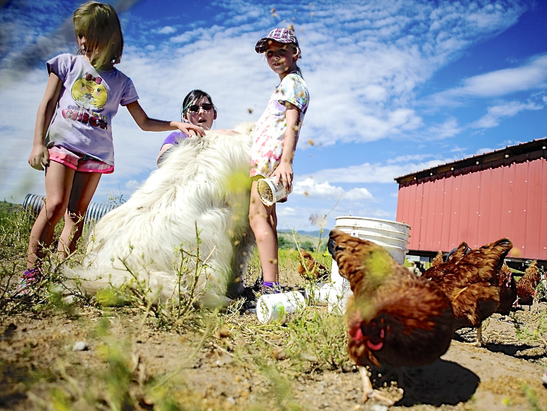 Yesteryear Village offering 'City Kids on the Farm' on Fridays
