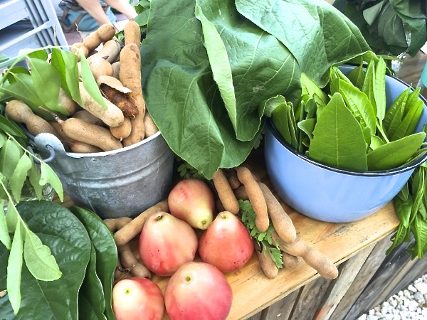 Slow Food Miami's Chefs Alliance Showcases Farmers and Summer Produce