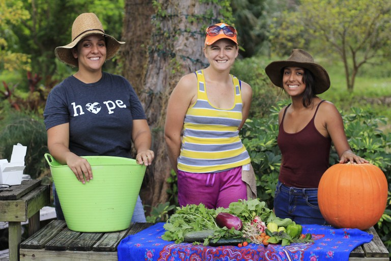 Interns Wanted at Organic Garden-Farm CSA Program in Pompano Beach