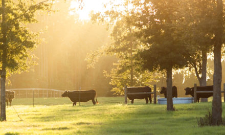 Clear Creek Farm, an Impressive Luxury Farm in Ocala for Wagyu