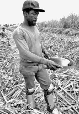 "Until about 1992, contract workers flown in from the West Indies for the sugar-cane season cut the stalks by hand with a ""Collin knife."" This Jamaican man is sharpening his knife. Shot circa 1989 along U.S. 27 in Hendry County. / J.D. Vivian"