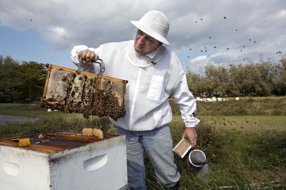 Steve Byers of Bee Healthy Honey Farms with bees in Delray Beach Tuesday, March 17, 2015.
