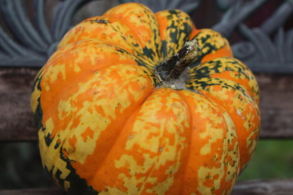 Carnival Squash Guide to Winter Squash