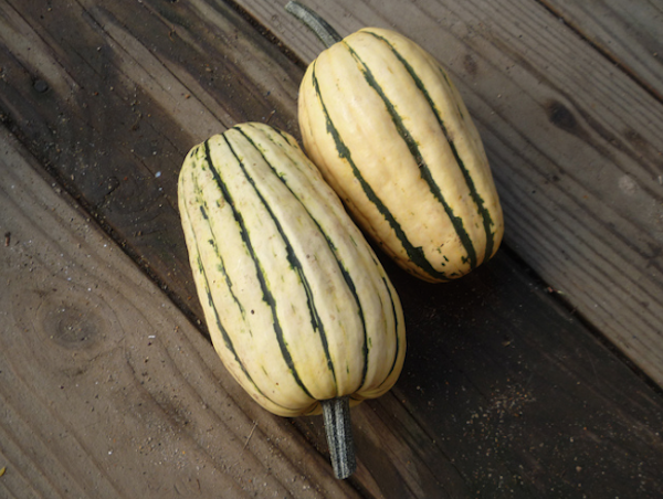 Delicata Squash - Guide to winter squash