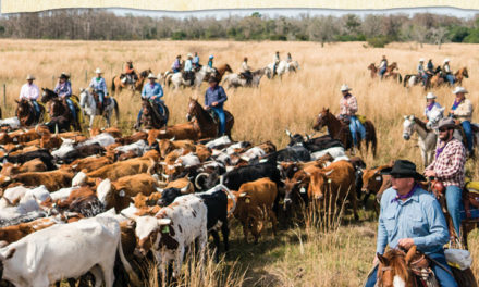 Did you miss the Great Florida Cattle Drive? Read (or watch) all about it!