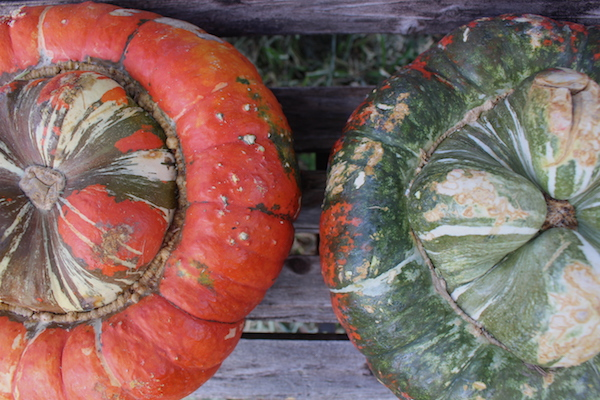 Turban Squash guide to winter squash