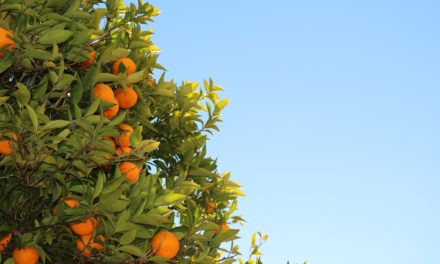 Agri-Briefs: Florida orange production holding steady