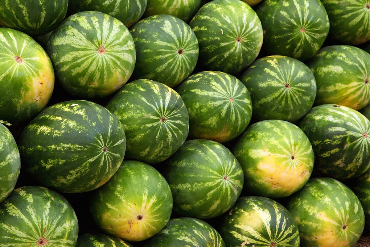 watermelon _ what to plant
