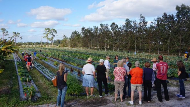 Visitors gather in the field to learn more about organic farming at Kai-Kai Farm in Indiantown. / Courtesy of Kai-Kai Farm