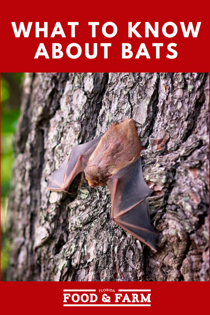 What to know about bats