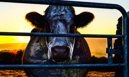 'Cowspiracy' addresses effects of animal agriculture on environment
