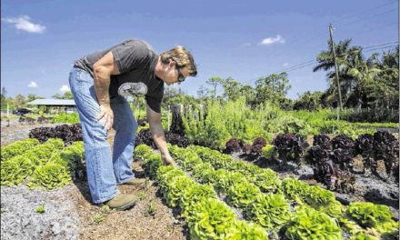 'Palm Beach Post': Healthy food need led to family farm
