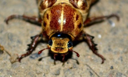 What you need to know about Florida pests and decomposition
