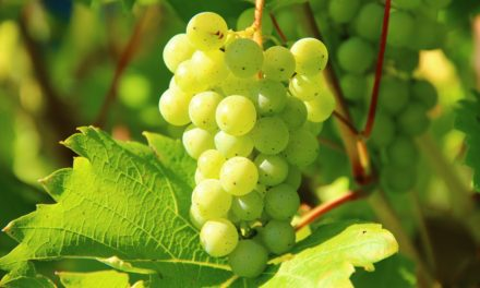 How much do you know about the history of Florida wines?