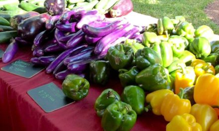 Marco Island Farmers Market to open Nov. 15