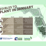 What to plant in January in Florida