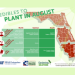 What to plant in August in Florida