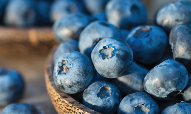 Blueberry Solstice Supper 2019