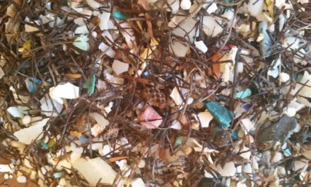 Marine Resources Council to host talk on ocean plastics Feb. 5