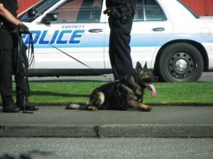 Everett Police K-9