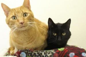Everett Animal Cats
