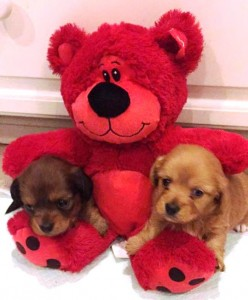 puppies and bear