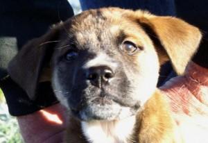 Kylie puppy
